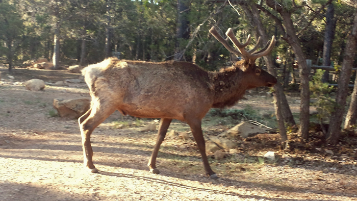 Elk Mather Campground