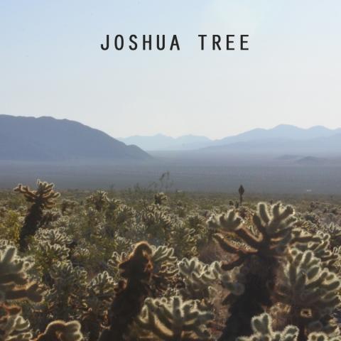 JoshuaTreeTile