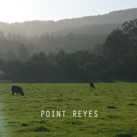 PointReyesTile